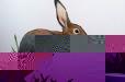 Natural life. Rabbit