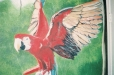 Safari, Macaw. Child's room mural. Wildlife theme