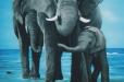 Elephant family. Nursery mural. Wildlife Theme