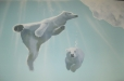 FINS, Indoor Swimming. Spring, TX. Polar Bears