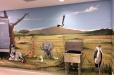 hospital-safari2