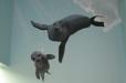 FINS, Indoor Swimming. Spring, TX. Seals