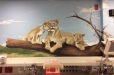 hospital-safari8