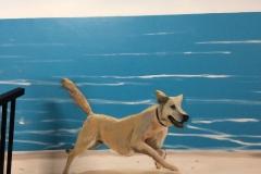 The Star, Dog run