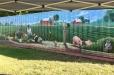 LBJ garden mural